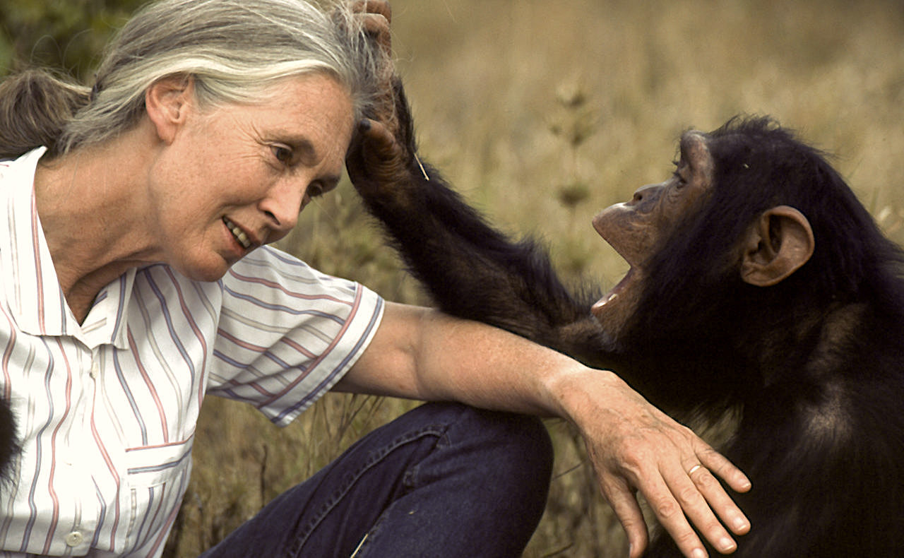 Jane Gooddall, Primatologist and anthropologist